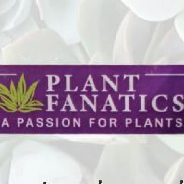 Plant Fanatics | Online Plant store South Africa | Online Nursery South Africa